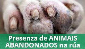 Banner animais abandonados
