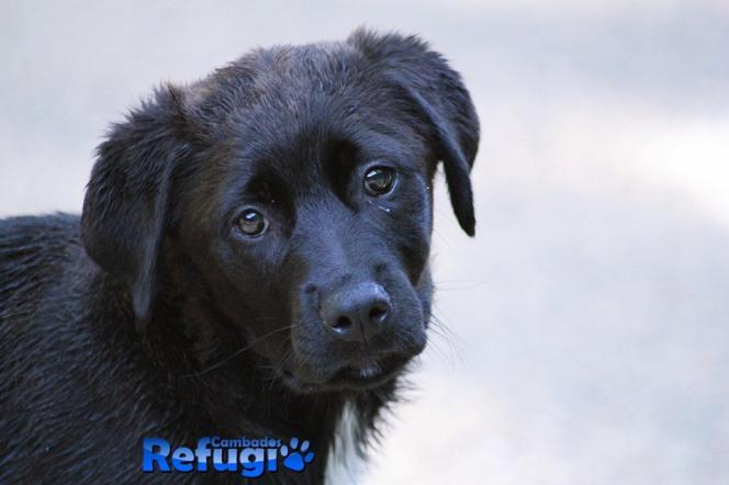 Este can (Maiden) foi recollido na urbanización de Aldea Nova, na base da Agrupación de Protección Civil o pasado día 1 de xullo de 2019.