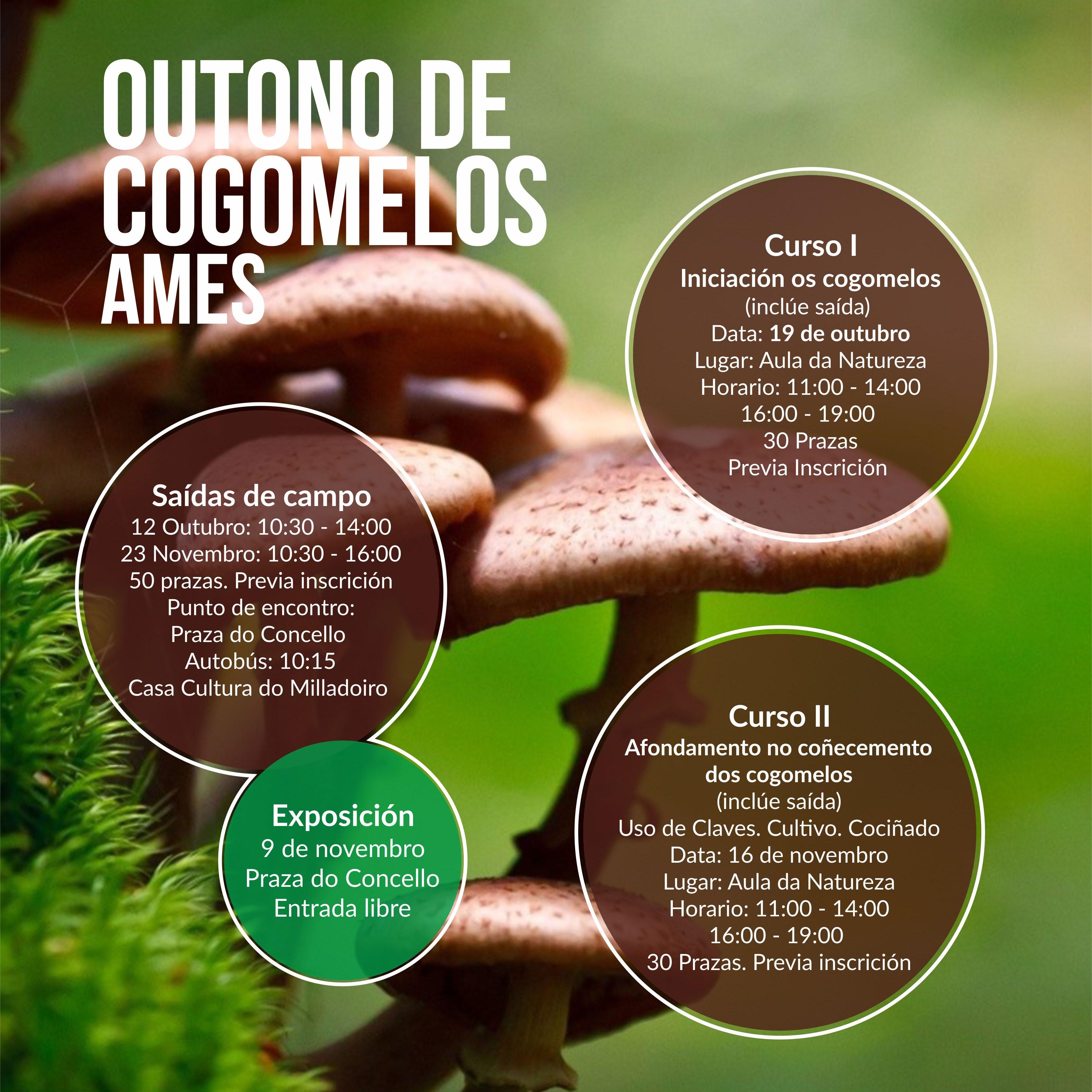 Cartel Outono de Cogomelos