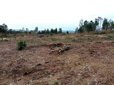 Imaxe da parcela onde se construirá o novo CEIP do Milladoiro